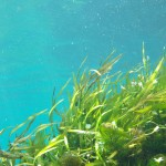 A seaweed farm - the first of its kind